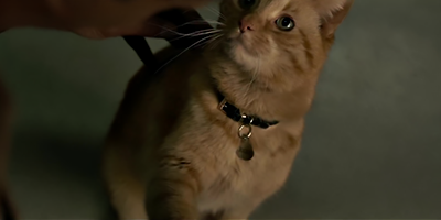 Captain Marvel Best Kitty.png